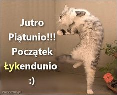 Jutro Piątunio!!! Początek Łykendunio :) Good Day Quotes, Dad Quotes, Quote Of The Day, Animals And Pets, Funny Animals, Weekend Humor, Just Smile, Romantic Quotes, Friendship Quotes