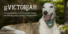 On December 2, 2016, greyhound racing was prohibited nationwide by the government of Argentina.