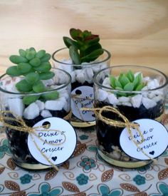 Ideas small succulent wedding favors for 2019 Small Cactus Plants, Small Succulents, Planting Succulents, Indoor Plants, Cactus Flower, Flower Pots, Succulent Wedding Favors, Cactus Y Suculentas, Succulent Terrarium
