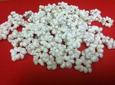 White Mongo shell rings 100 by hulamelani on Etsy