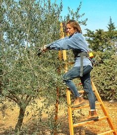 Olivier En Pot, Olive Gardens, Permaculture, Agriculture, Planters, World, Matilda, Olives, Provence