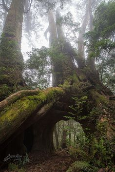 Eight Immortals Tree | ©Steve Kim (Taiwan)