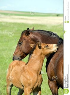 Mare And Foal Stock Photo - Image: 5533780