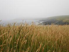 Mistaken Point, Newfoundland, Canada - August 2011