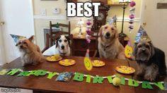 ¡Has celebrado su cumpleaños!