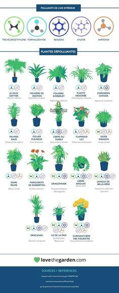Plantes dépolluantes de l'air intérieur Potted Plants Patio, Planting Succulents, Indoor Plants, Indoor Garden, Outdoor Gardens, Jungle House, Houses In France, Mini Terrarium, Decoration Plante
