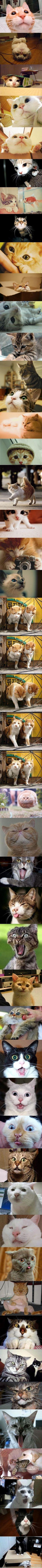 cat cat cat ...