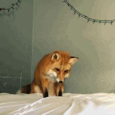 혐주의) 사냥감의 심장을 노리는 사악한 짐승... | 유머 게시판 | 루리웹 모바일