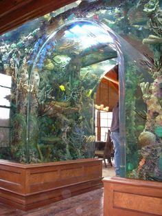 Meerwasseraquarium als Raumteiler