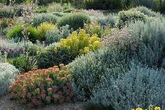Image result for olivier filippi dry gardening