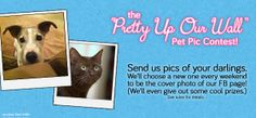 """The """"Pretty Up Our Wall"""" Pet Pic Contest! Send us pics of your darlings. Get on our wall. Win prizes! Enter here: http://woobox.com/sqwxdq"""