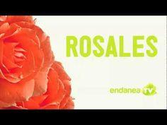 ENDANEA Rosales Tutorial - YouTube