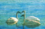 "New artwork for sale! - "" Swans Water Swimming Beauty  by PixBreak Art "" - http://ift.tt/2mzESnR"