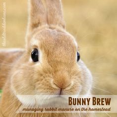 theoldtroddenlane.com BUNNY BREW: MANAGING RABBIT MANURE ON THE HOMESTEAD