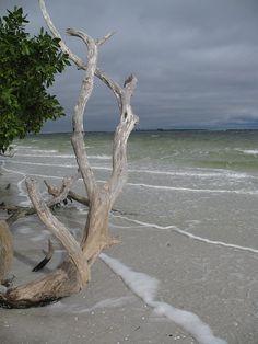 ✯ Driftwood on the Beach