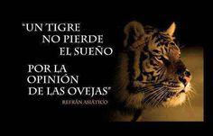 Un tigre no pierde el sueño...