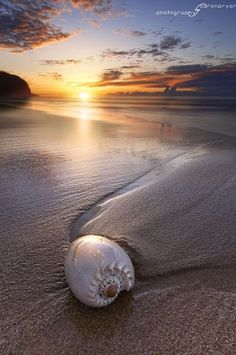 Beautiful Sunset, ocean , sea shell ♥ by herland I Love The Beach, All Nature, Amazing Nature, Foto Art, Ocean Beach, Beach Sunsets, Shell Beach, Sunset Beach, Beach Bath