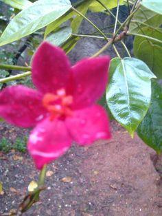 Flor en la lluvia