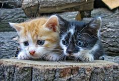 @Tara Beley, do these kitties bare a striking resemblance to...Garfield and Nermal? Moment of silence...