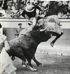Un verdadero tercio de varas! Miura de 597 kgs lidiado por Rafael Pedrosa y al que se le dio: 7 puyazos con 5 derribos. Bilbao, 25/VIII/1963