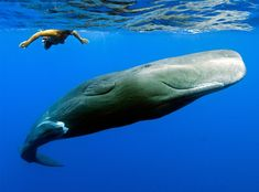 Andrew and his friend, a young sperm whale