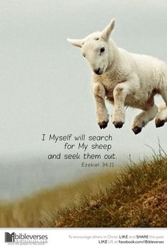 """For thus says the Adonai Elohim, """"Behold, I Myself will search for My sheep and seek them out. Biblical Quotes, Religious Quotes, Bible Verses Quotes, Bible Scriptures, Adonai Elohim, Scripture Pictures, The Good Shepherd, Bible Truth, God Jesus"""