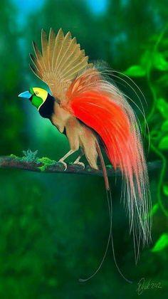 Raggiana Bird-of-paradise (Paradisaea raggiana) is the national bird of Papua New Guinea By Marina Molnar