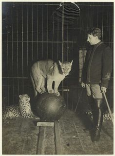 1904 Dreamland's Wild Animal Show. Coney Island, Brooklyn New York. Dreamland operated from 1904-1911. An accidental fire broke out May 27, 1911 which completely devastated the entire park.