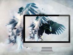 Beautiful Birds Wallpapers [Wallpaper Wednesday]