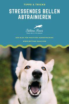 Dog Playground, Springer Spaniel, Fun Activities, Dog Training, Best Dogs, Terrier, Positivity, Mochi, Animals