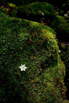 in Yakushima, Japan Yakushima, Mother Earth, Mother Nature, Natural Wonders, Natural World, Beautiful World, Mousse, Beautiful Flowers, Nature Photography