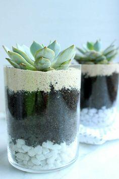 pflegeleichte zimmerpflanzen bilder glas steine sukkulenten