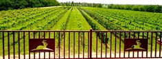 Grace Hill Winery | 6310 S. Grace Hill Rd.   -   Whitewater, KS 67154