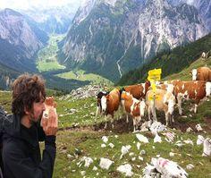 Kazoojón® & Cows