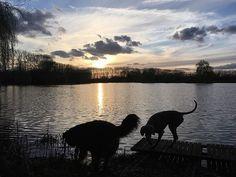 Ah the lake : @miesenco.be - - #puppylove #doglover #dogoftheday #instapet #doggy #doglovers  #dogsofig #doglife #dogsofig #doglife #doggie #doglove #happydog #hund #perro #dogscorner #dogsofinstaword #chien  #doge #dogloverstagram