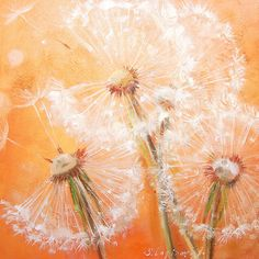 love the soft orange Dandelion Wall Art, Dandelion Painting, Abstract Flowers, Watercolor Flowers, Watercolor Paintings, Painting Inspiration, Amazing Art, Art Drawings, Canvas Art