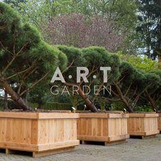 Acheter Vos Arbres chez le spécialiste du Jardin Zen français . ART Garden www.art-garden.fr