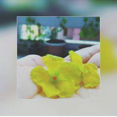 कोई फूल है कहीं,अपनी खुशबू से जूदा, सिर्फ महकने के लिए ,कोई मूहब्बत नहीं करता।