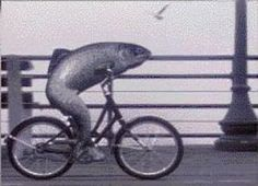 Like a fish needs a bicycle