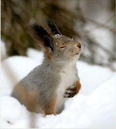 このウサギさんは恐らくキリスト教徒ですね。 仏教徒と思われる祈るカワウソさんとは好対照。