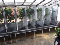 Terrariums Diy, Terrarium Reptile, Terrarium Ideas, Chameleon Enclosure, Reptile Enclosure, Reptile Room, Reptile Cage, Les Reptiles, Reptiles And Amphibians