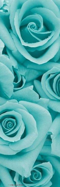 Best wedding colors aqua turquoise tiffany blue id Vert Turquoise, Shades Of Turquoise, Shades Of Blue, Teal, Turquoise Flowers, Green Flowers, Verde Tiffany, Photo Bleu, Light Blue Aesthetic