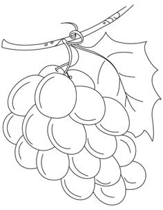 Fresh green grapes coloring pages | Download Free Fresh green grapes coloring…