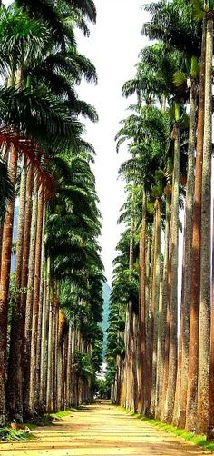 Botanic Garden, Rio de Janeiro -Jardim Botânico