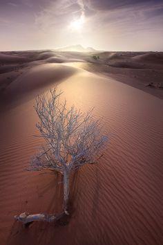 Never Give up, Desert, Dubai, UAE