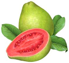 Realistic watercolor tropical fruit stock art illustrations including banana, mango, pineapple, figs, and pomegranate. Vodka Fruit Drinks, Recipes With Fruit Cocktail, Guava Plant, Guava Fruit, Fruit Fruit, Fruit Illustration, Food Illustrations, Guava Images, Best Energy Drink