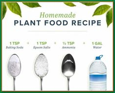homemade plant food recipe Sometimes plants get hungry after it's used up all its soils nutrients. Thankfully, you can make homemade plant food to keep your plant happy and healthy! Homemade Plant Food, Homemade Fertilizer For Plants, Organic Fertilizer, Inside Plants, Plant Health, House Plant Care, Growing Plants, Growing Herbs Indoors, Plant Decor