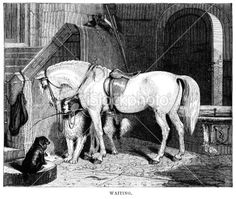 Victorian horses art Illustration | Search for stock photos, illustrations, video, audio and editorial ...