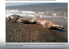 Syberia: morze wyrzuciło na brzeg pozostałości niezwykłego morskiego stwora