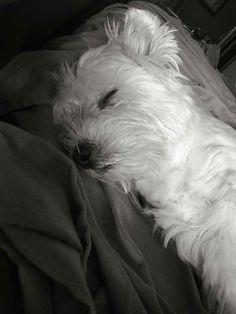 Sleepy Time❤❤❤